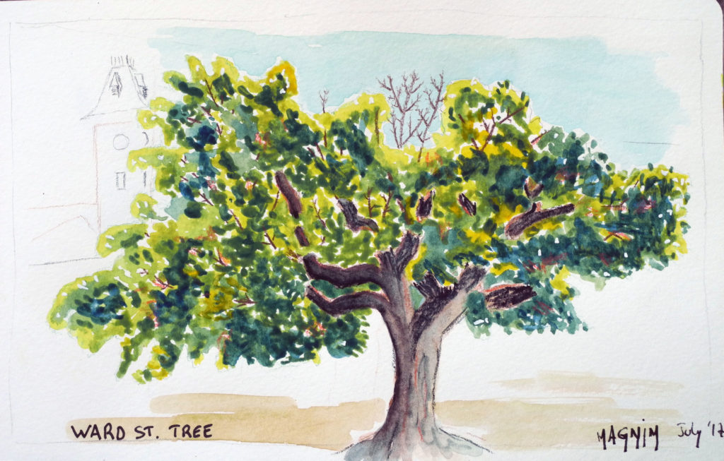 Maple-tree-sketch