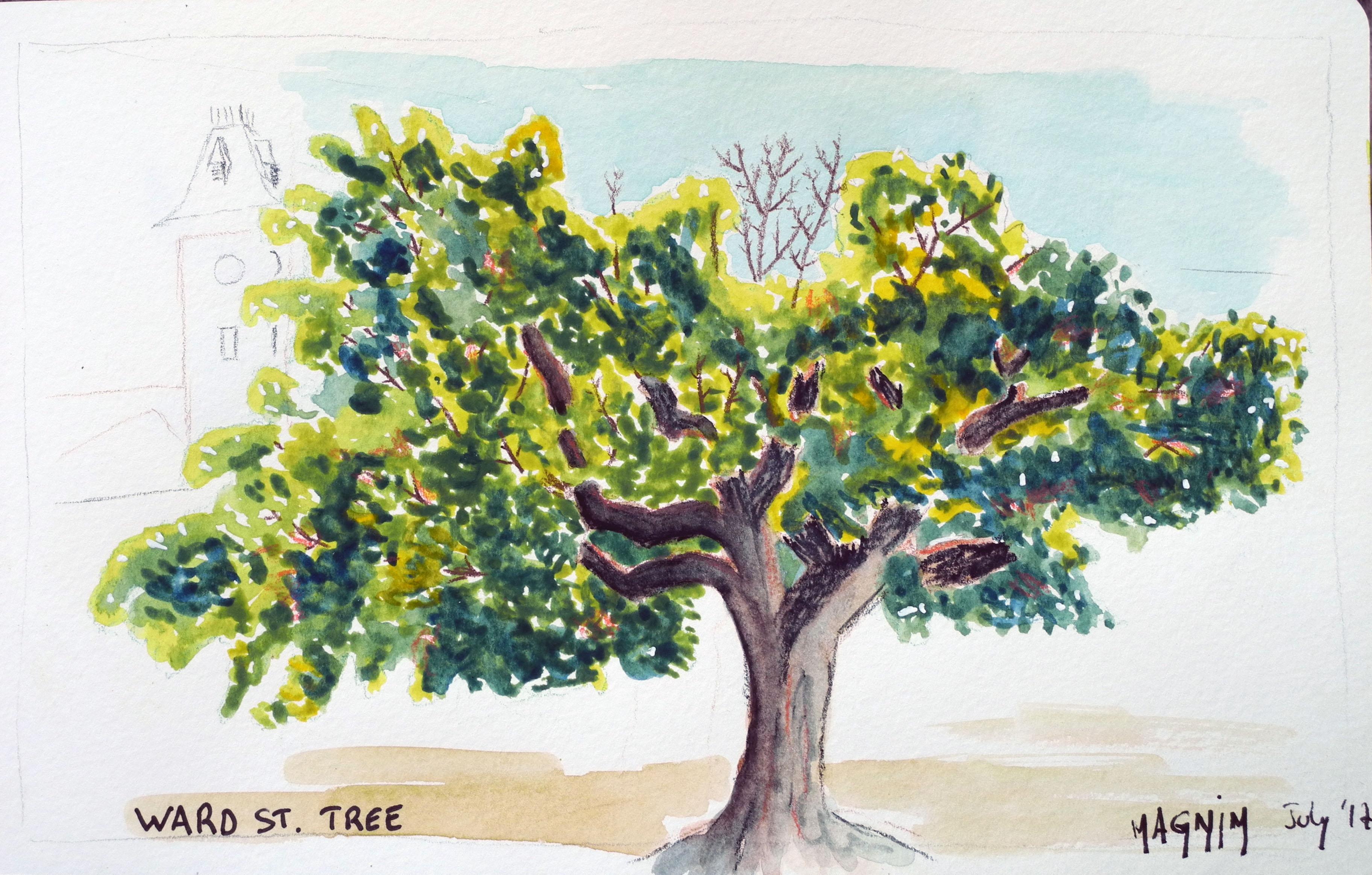 érable-esquisse-aquarelle